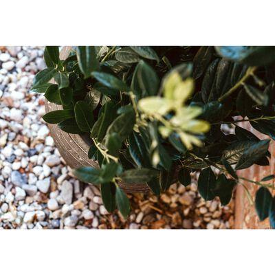 Capi Jarrón cónico Nature Row redondo verde oliva 42x38 cm