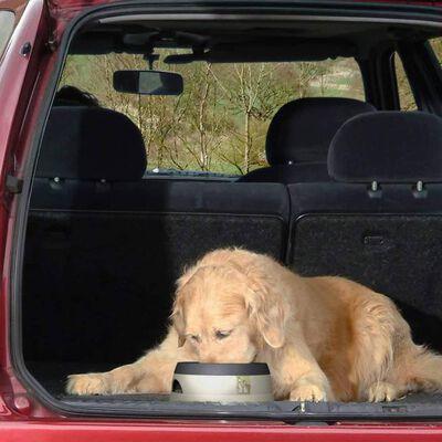 Road Refresher Bebedero de mascotas sin derrames pequeño gris SGRR