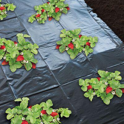 Nature Mantillo para fresas 1,4x20 m 6030231