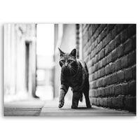 Cuadro Lienzo, Impresión Digital - Paso De Gato - Decoración Pared