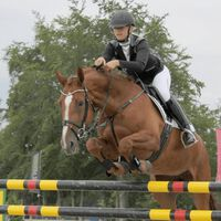 Qhp Ridingbreeches Adult  | 38 | Miscota Ecommerce