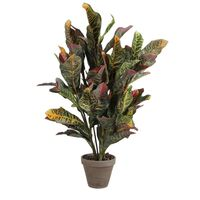 Croton Verde Pvc Con Manceta Gris